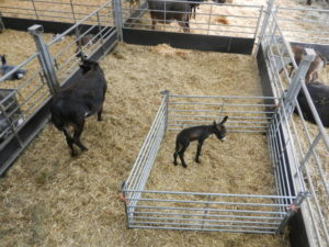 Reception visits Cannon Hall Farm